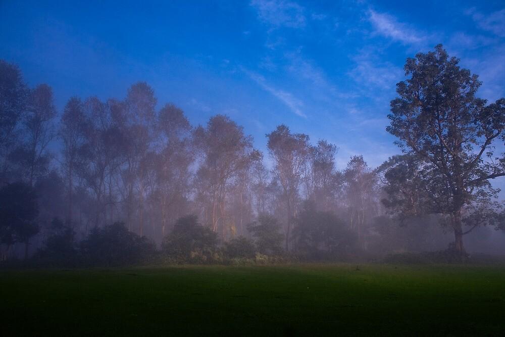 Misty Morning at Sauraha by Sanam  Chitrkar