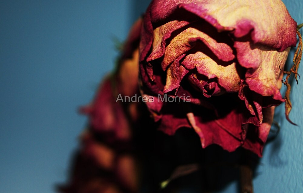 Roses Will Wither.2 by Andrea Bodnarik