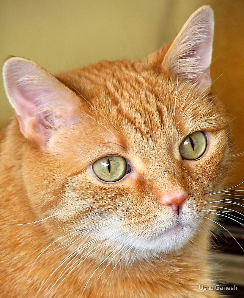 Cat Close-Up by Usha Ganesh