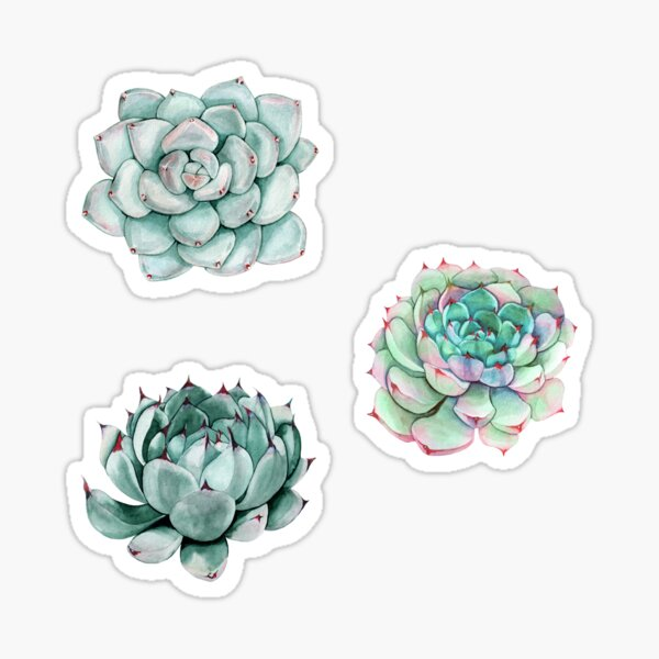 Succulent stickers  Sticker