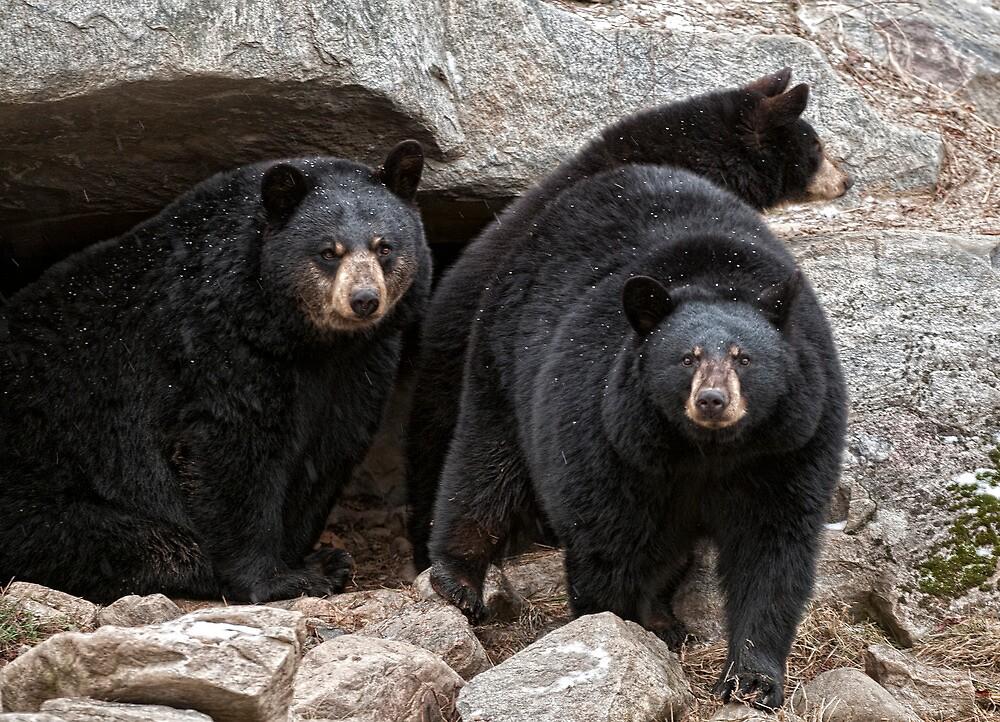 The Bear Den by Bill Maynard