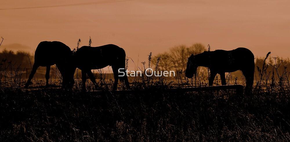Equine Dawn by Stan Owen