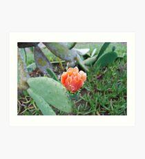 Tunchi flower, St Helena Art Print