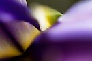 Iris Abstract by EchoNorth