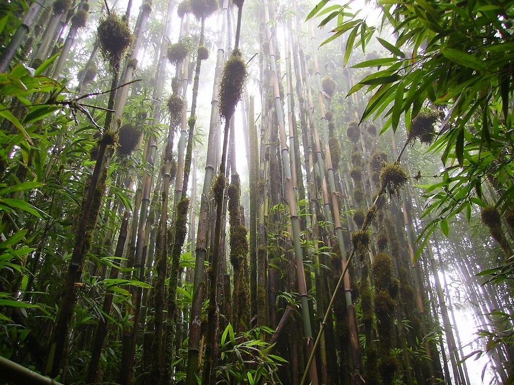 Bamboo, green mountain, ascension island by dizzyshell42