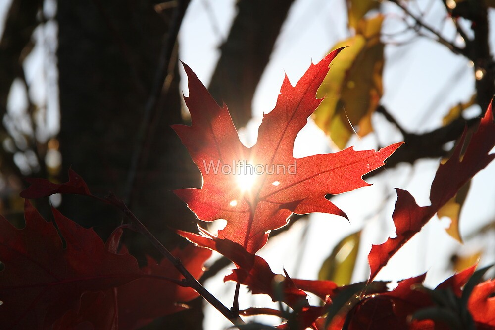 Leaf Light by Wolfhound