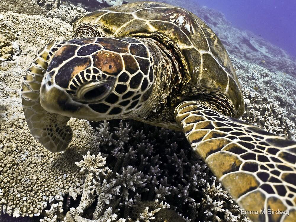 Yertle the Turtle / Emma M Birdsey by Emma M Birdsey