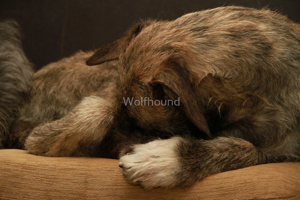 Innocence by Wolfhound