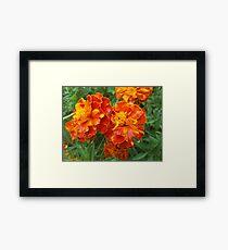 Vibrant Red-Orange Flowers Framed Print