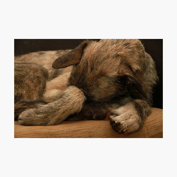 Italian Spinone 8 x 10 Free Standing LIFE IS BETTER Picture 10x8 Dog Print Gift