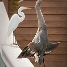 """Flasher"" - a great blue heron seems to be exposing itself by ArtThatSmiles"