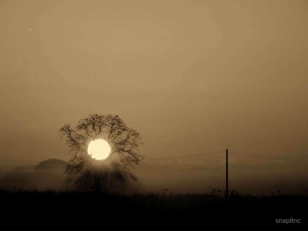 """""""the moon tree"""" by snapitnc"""