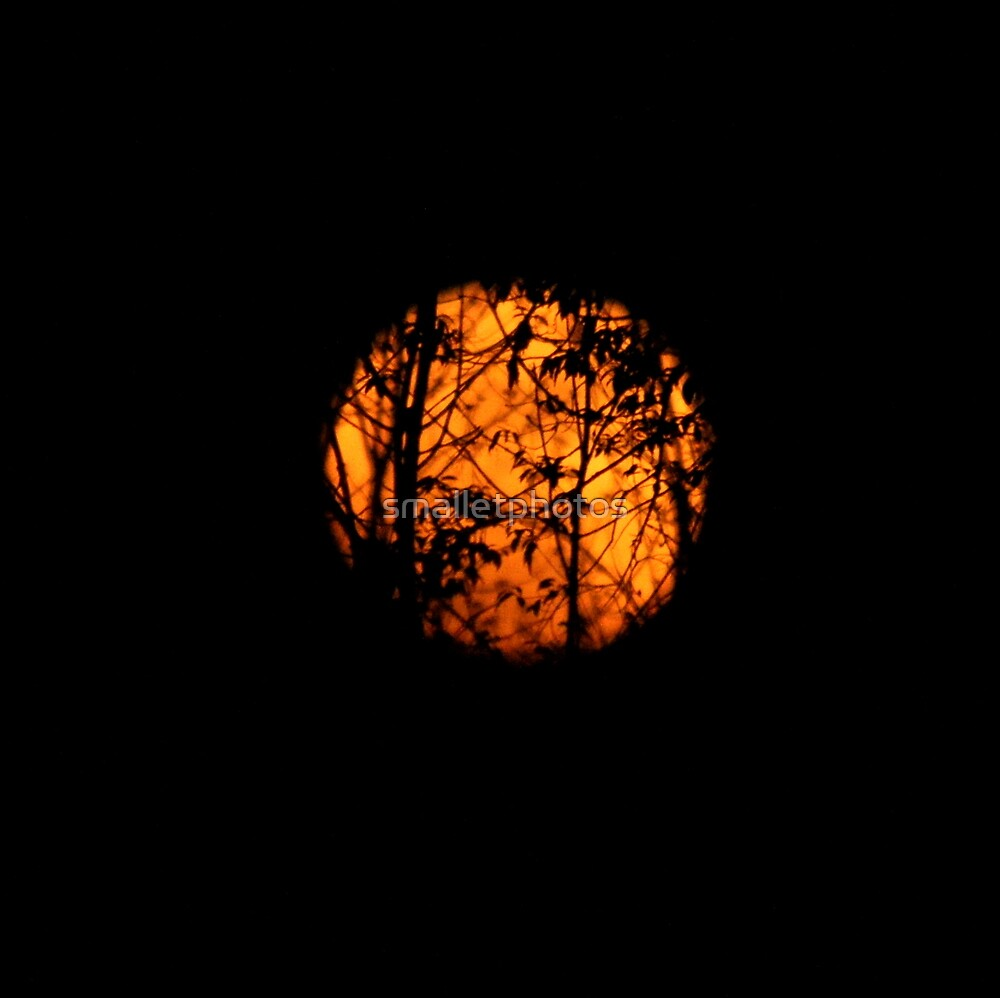 Moon Entwined by smalletphotos