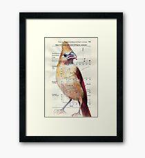 Young Cardinal Framed Print