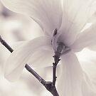 Gentleness by Kelly Chiara