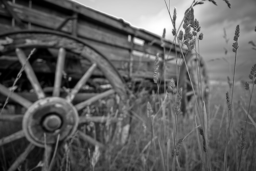 grass, haycart and a brooding sky by Glen Barton