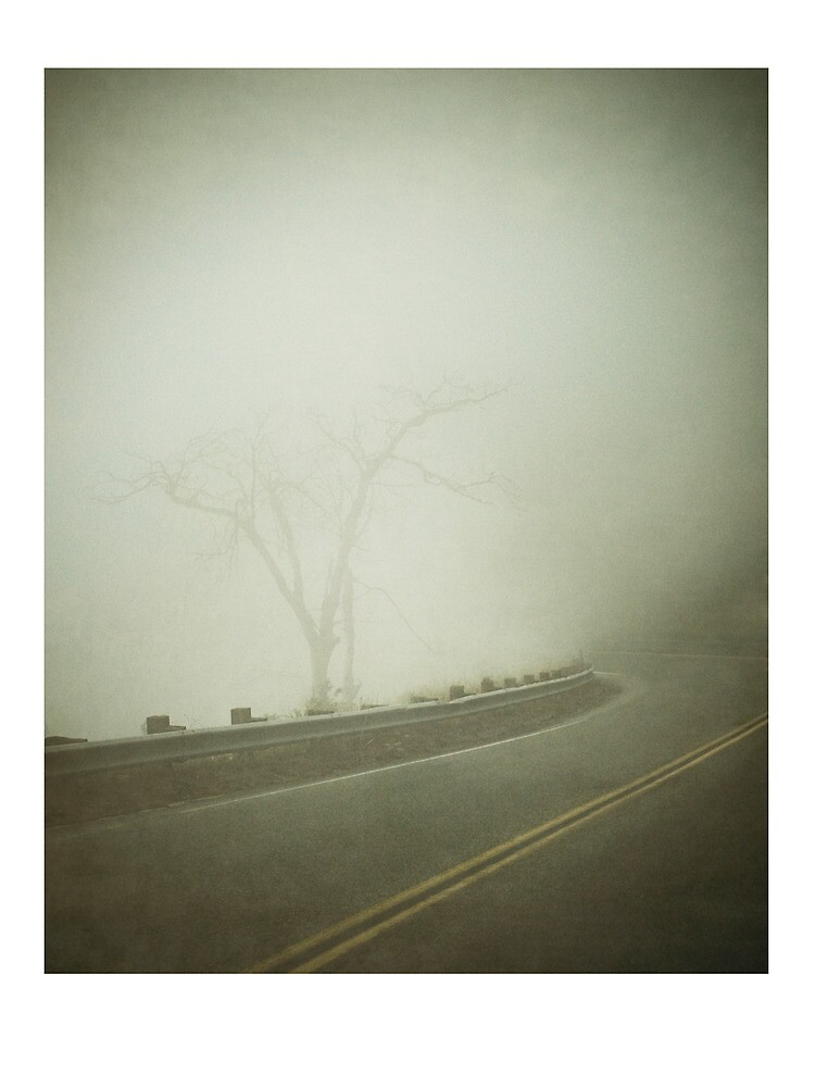Rim Forest Drive by brian watkins