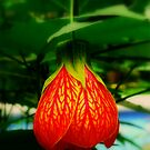 Singapore Botanical Gardens by David Mellor