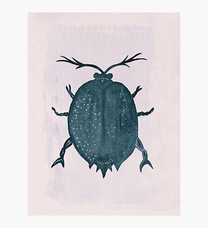 Beetle, Two Photographic Print