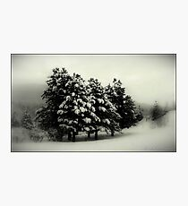 Peace on Earth Photographic Print