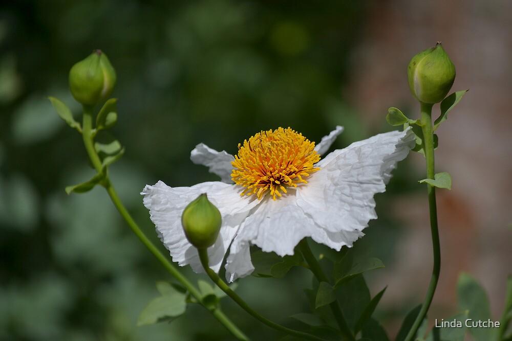 If flowers had wings...... by Linda Cutche