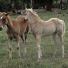 Skyhorse Fillies by skyhorse