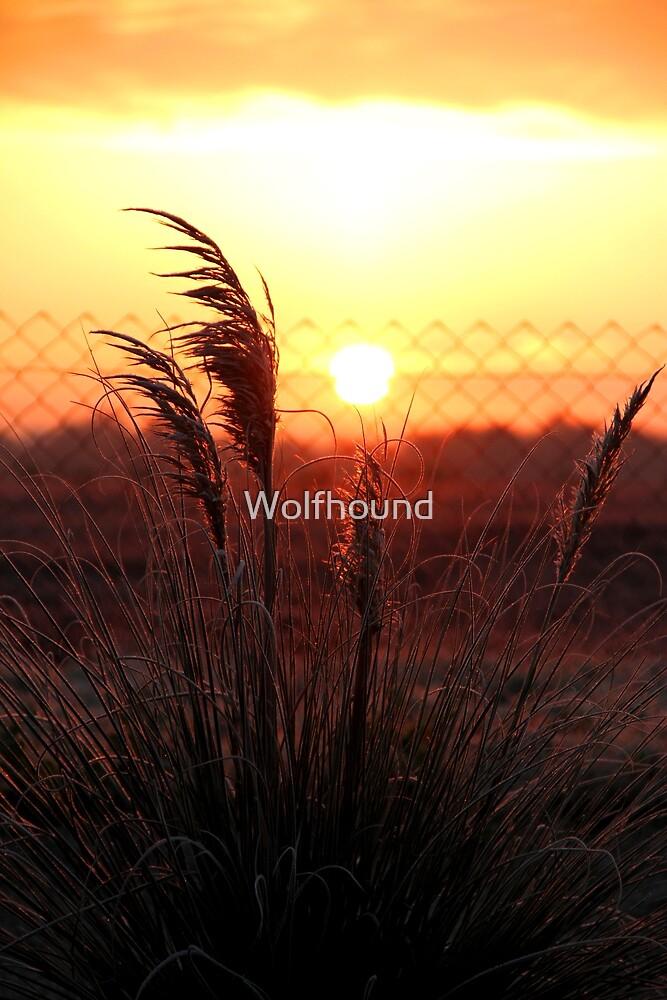 Frosty Start by Wolfhound