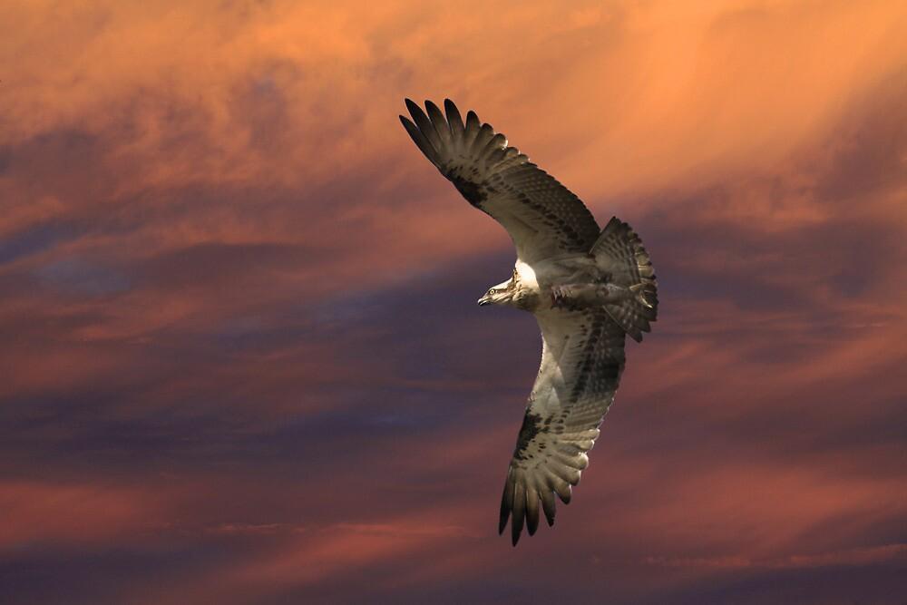 Sunset Hunting by byronbackyard