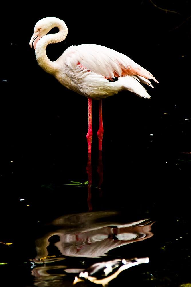 Pink Flamingo by Richard Sugandha