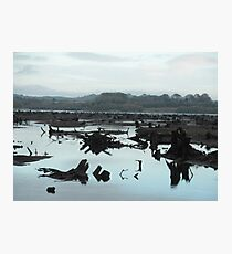 The Gearagh - wooded river - Cork Photographic Print