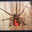 Red Back Spider by aussiebushstick