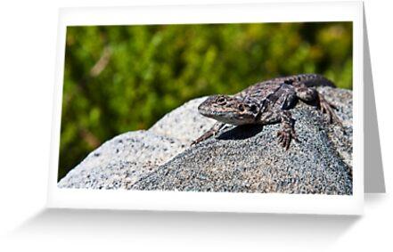 Lizard II by Richard Sugandha