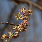 Winter Bouquet by Lynn Wiles