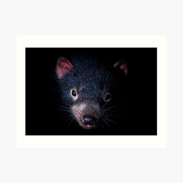 Tasmanian Devil, Port Arthur, Tasmania Art Print