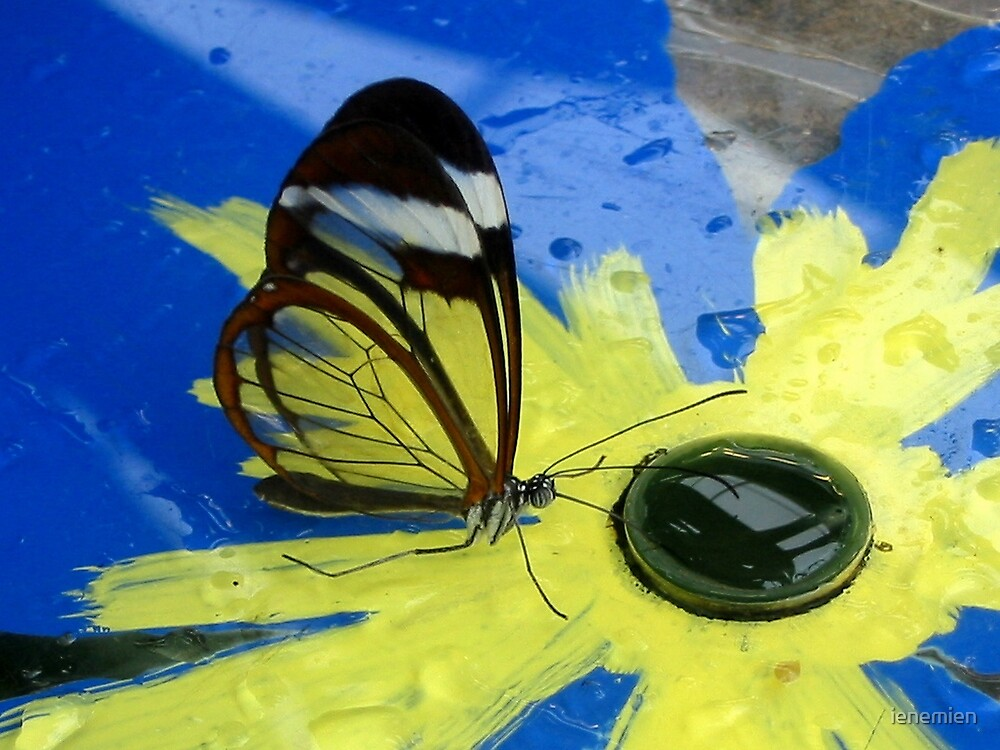 Glasswing on Yellow and Blue by ienemien