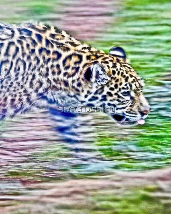 Jaguar - movement by suecrossley