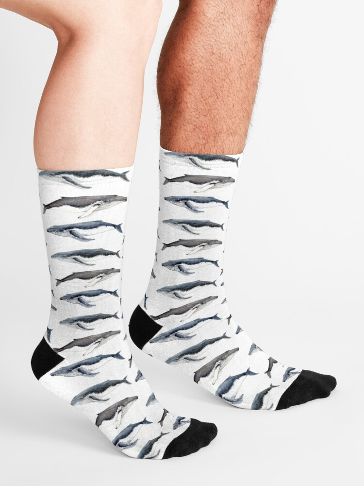 Alternate view of Humpback whales (Megaptera novaeangliae)  Socks