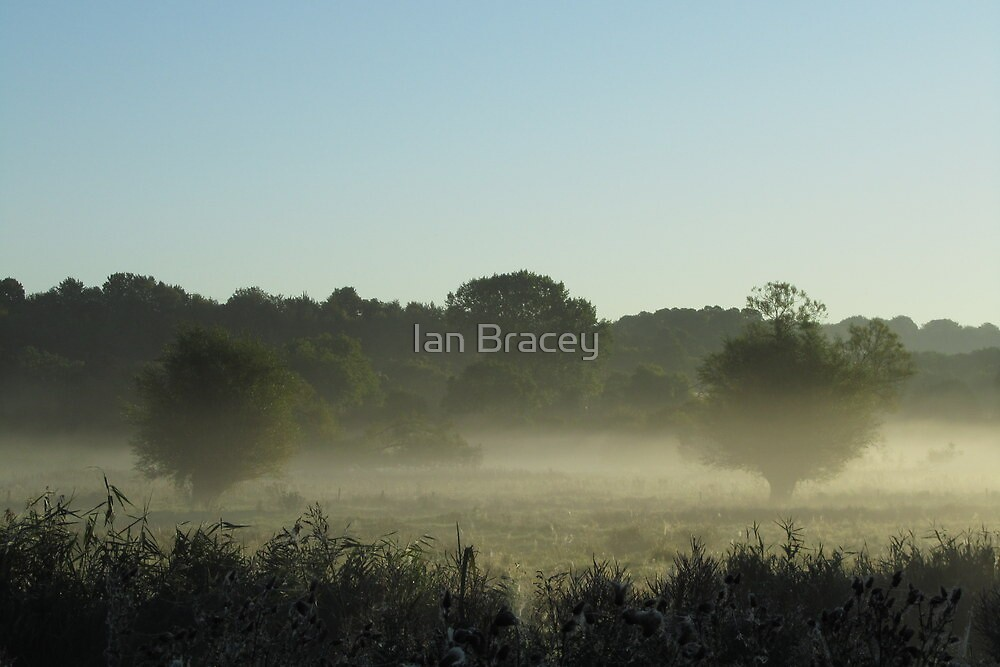 Two Trees in the Mist, Britford by Ian Bracey