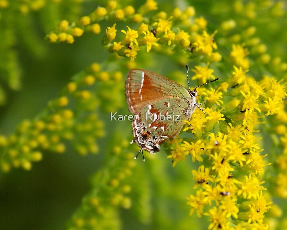 Butterfly and goldenrod by Karen  Rubeiz