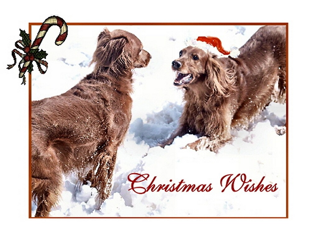 Christmas Wishes by Barb Miller
