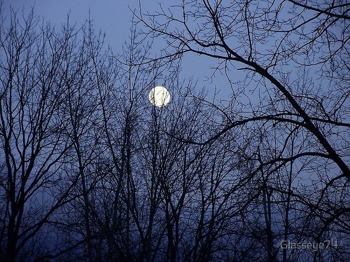 Moon through the trees by Glasseye74