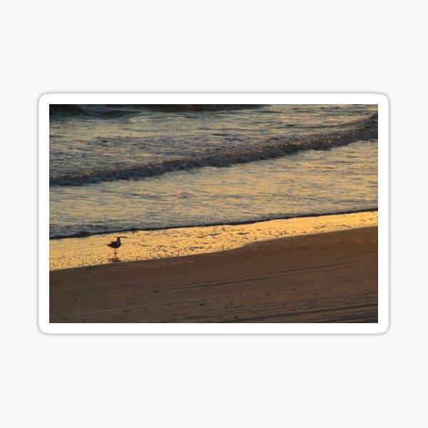 Lone Ring-Billed Gull at Sunrise Sticker