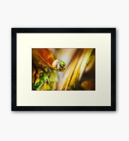 In Pursuit of Pearls Framed Print