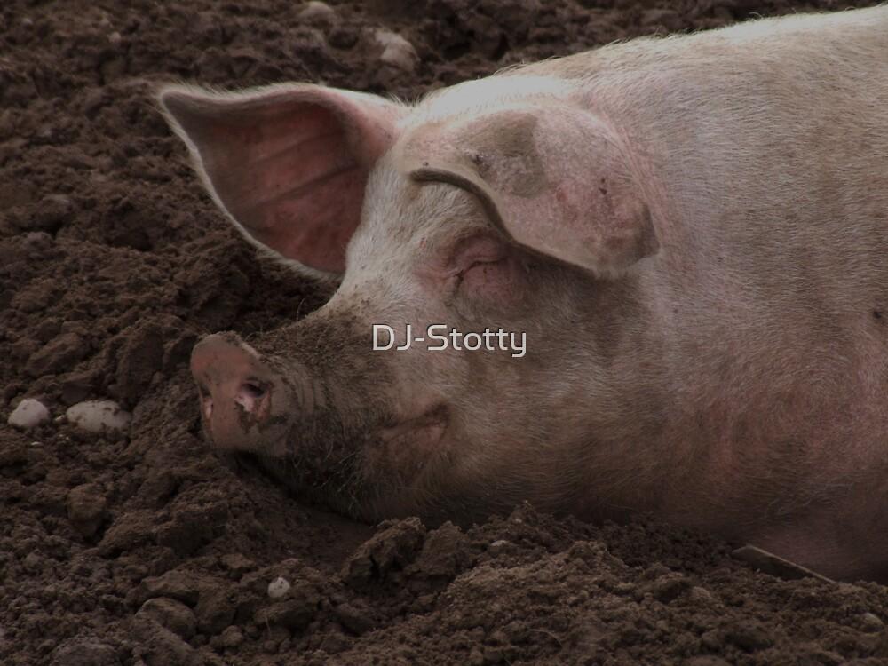 A sleeping pig by DJ-Stotty