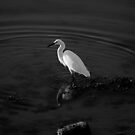 Egret by Stephen Peters