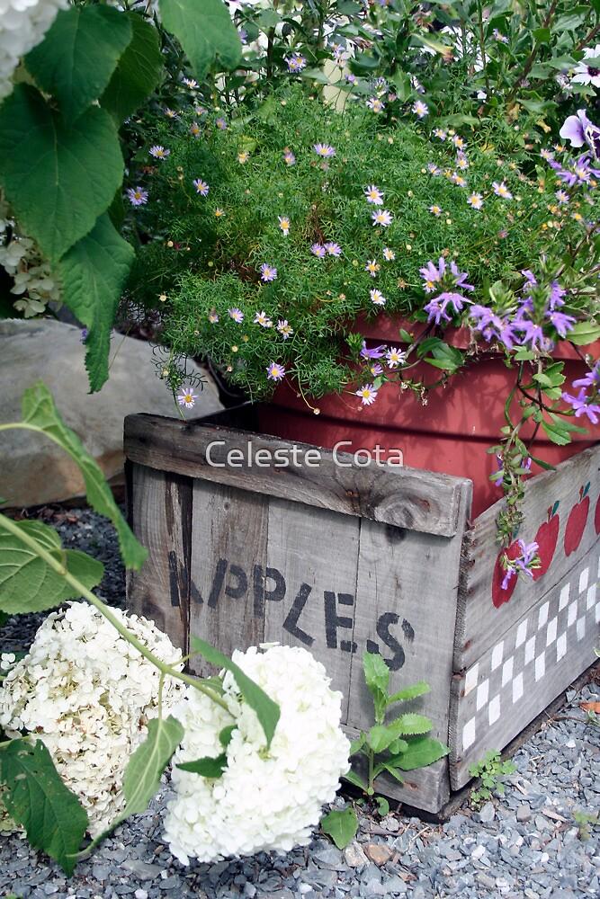 Apple crate in garden by Celeste Cota