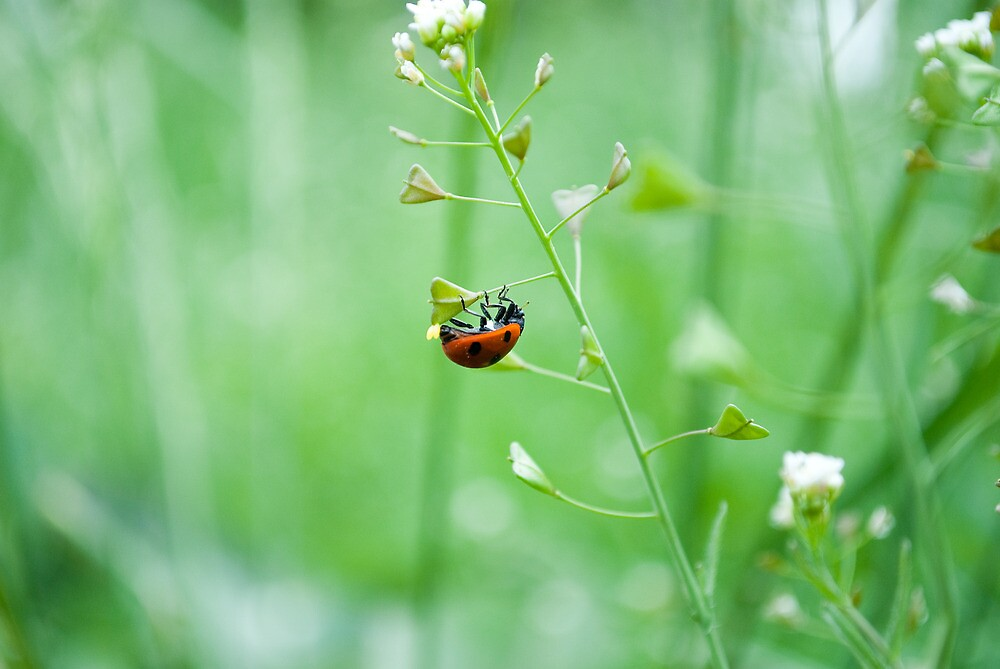 Ladybug's green vision by rusfruit