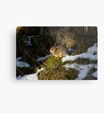rabbit in the snow Metal Print