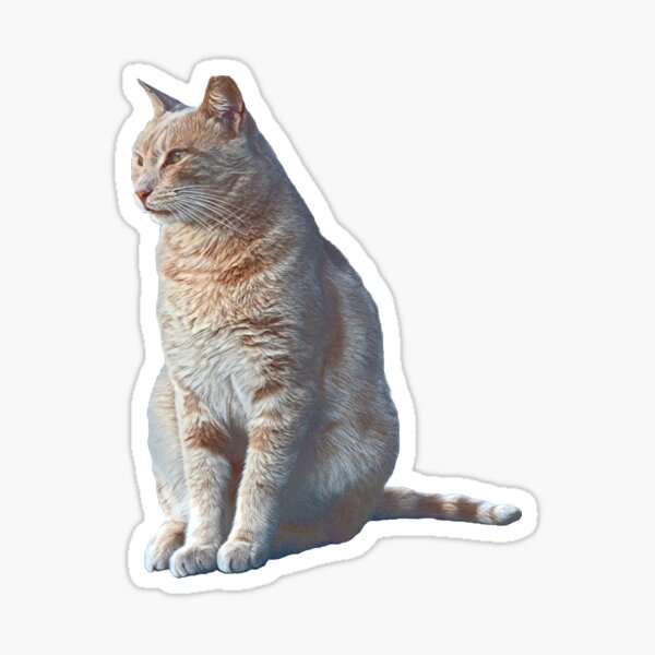 Mr Cat #1 Glossy Sticker