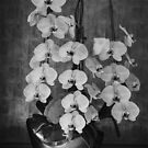 White Orchids in Brass Bowl by Gerda Grice